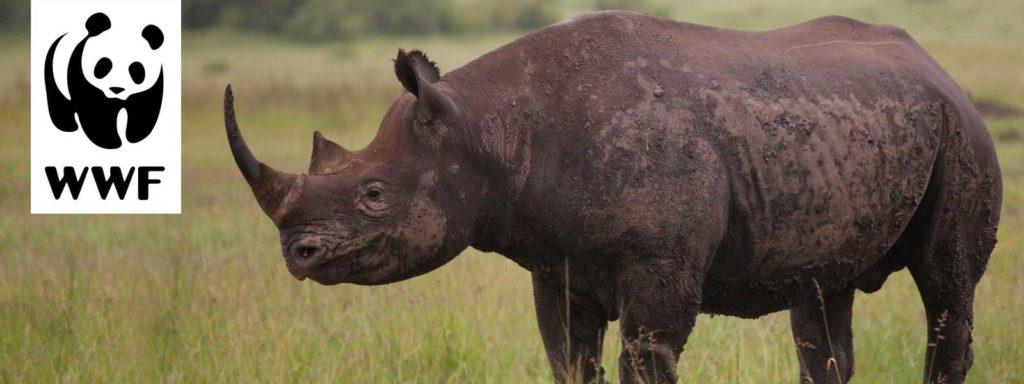 World Wildlife Fund Sponsorship